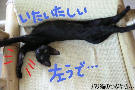 ブログ20110624-3.JPG