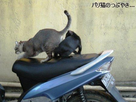 ブログ20110626-5.JPG