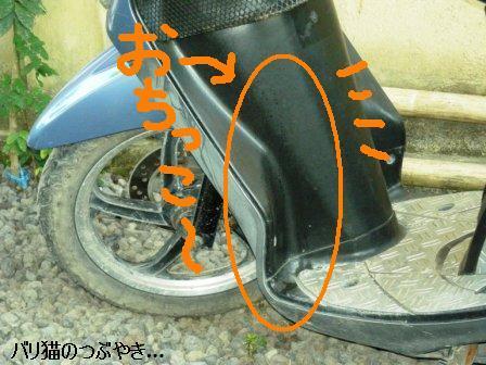 ブログ20110626-6.JPG