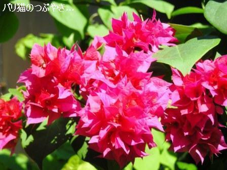 ブログ20110628-3.JPG