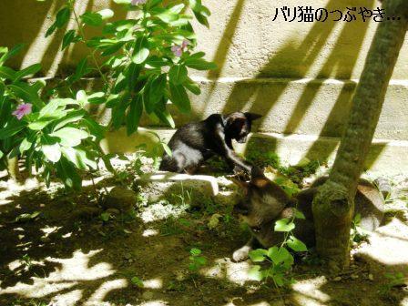 ブログ20110628-5.JPG