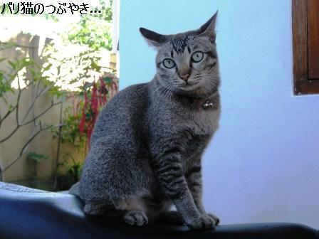 ブログ20110724-3.JPG