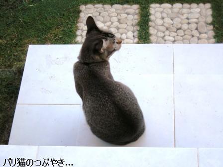 ブログ20110725-1.JPG