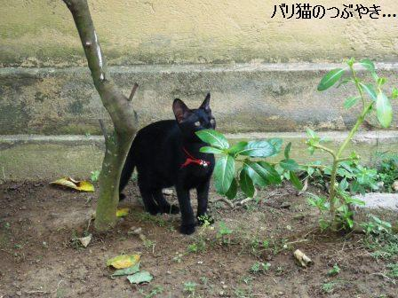 ブログ20110725-2.JPG