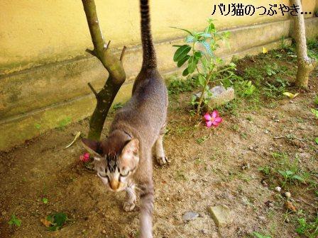 ブログ20110725-3.JPG