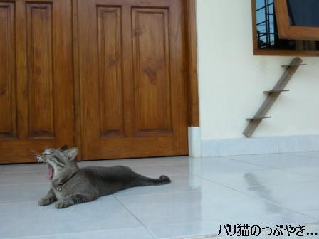 ブログ20110726-1.JPG