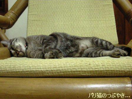 ブログ20110726-2.JPG