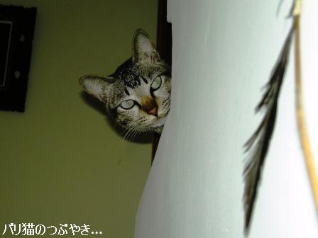ブログ20110727-1.JPG