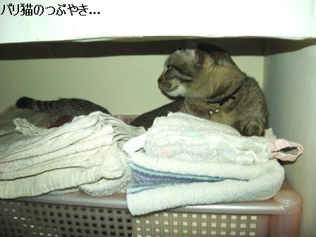 ブログ20110813-1.JPG