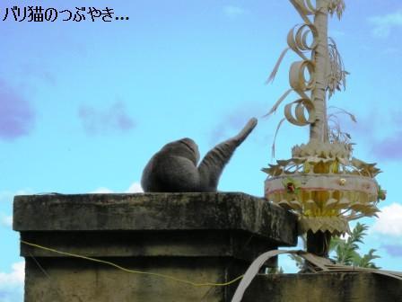 ブログ20110823-2.JPG