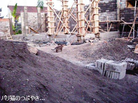 ブログ20110824-2.JPG