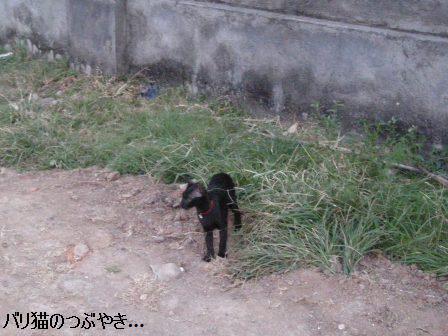 ブログ20110824-3.JPG