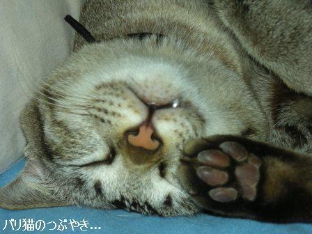 ブログ20110826-1.JPG