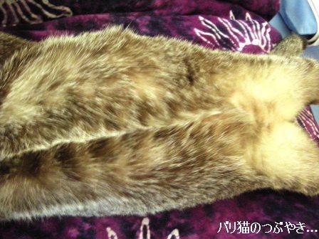 ブログ20110827-1.JPG