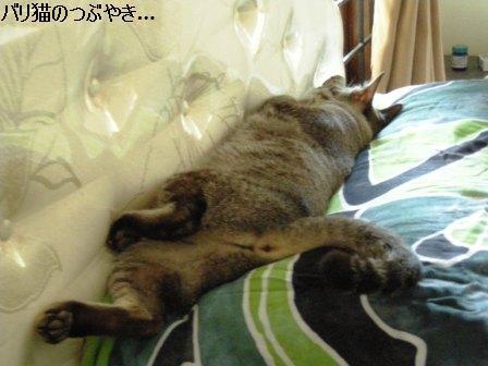 ブログ20110828-1.JPG