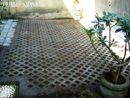 ブログ20110828-12.JPG