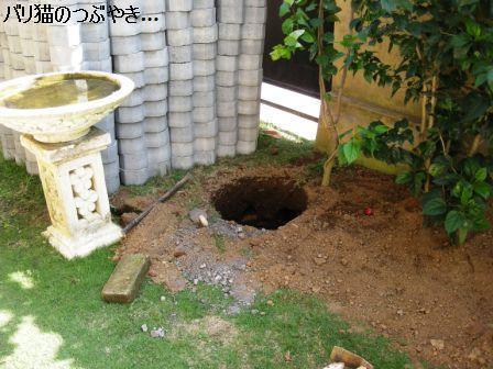 ブログ20110828-5.JPG
