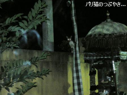 ブログ20110829-4.JPG