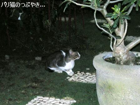 ブログ20110829-5.JPG