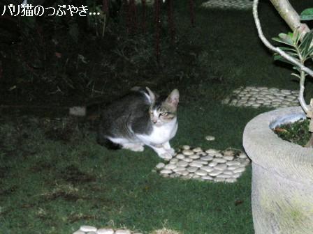ブログ20110829-6.JPG