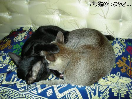 ブログ20110901-2.JPG