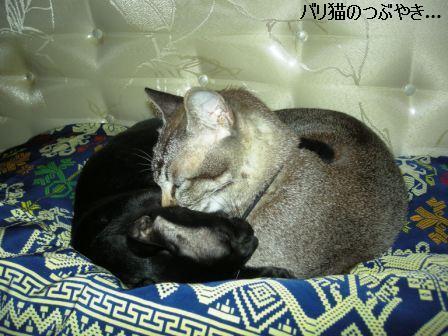 ブログ20110901-3.JPG