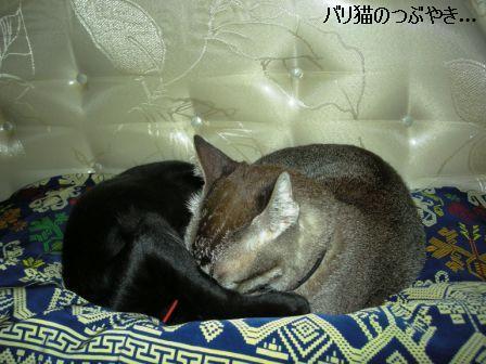 ブログ20110901-5.JPG
