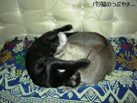 ブログ20110901-6.JPG