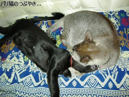 ブログ20110901-7.JPG