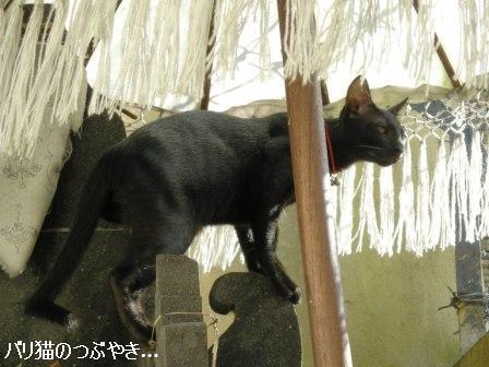 ブログ20110904-2.JPG