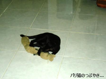ブログ20110906-4.JPG