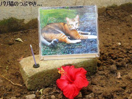 ブログ20110908-5.JPG