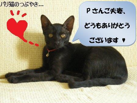 ブログ20110908-6.JPG