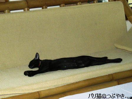 ブログ20110909-1.JPG