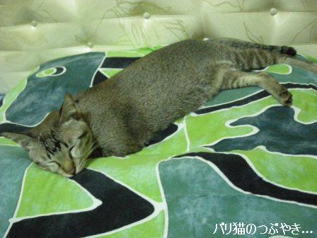 ブログ20110911-2.JPG