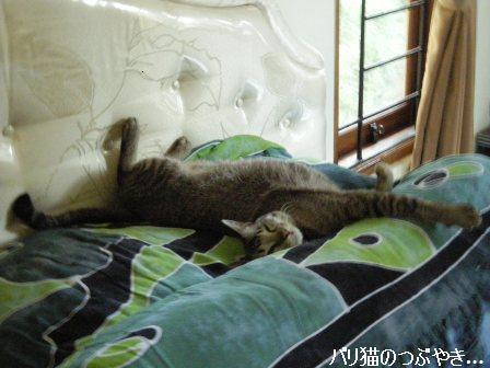 ブログ20110911-4.JPG