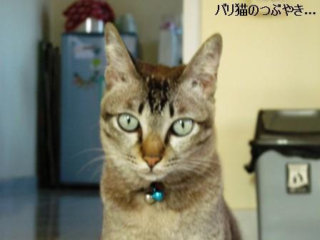 ブログ20110913-1.JPG