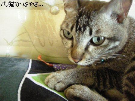 ブログ20110913-10.JPG
