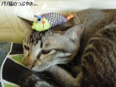 ブログ20110913-11.JPG