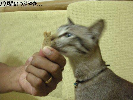 ブログ20110913-5.JPG