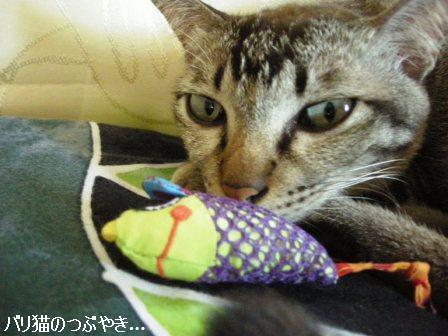 ブログ20110913-9.JPG