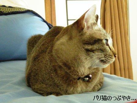 ブログ20110914-6.JPG