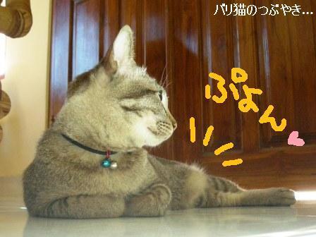 ブログ20110915-1.JPG