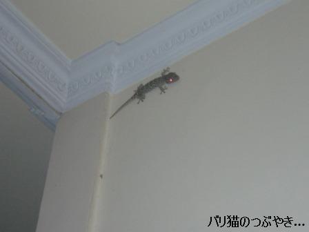 ブログ20110915-4.JPG