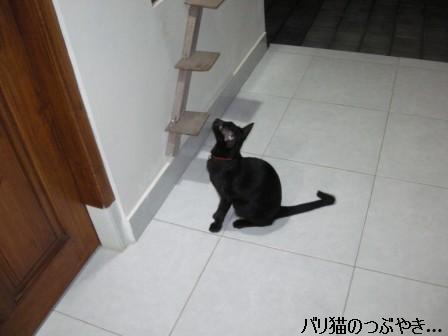 ブログ20110915-5.JPG