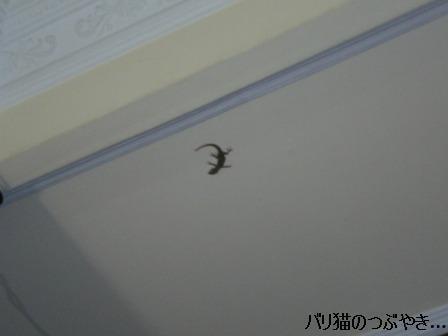 ブログ20110915-6.JPG