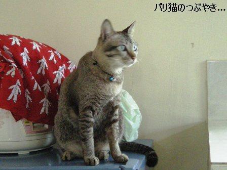 ブログ20110916-1.JPG