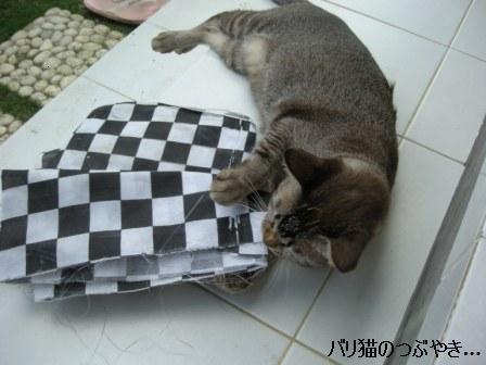 ブログ20110916-3.JPG