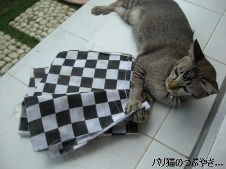ブログ20110916-4.JPG