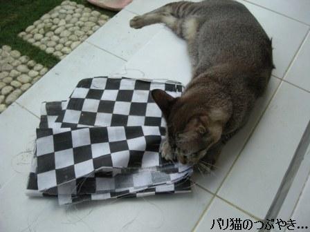ブログ20110916-5.JPG